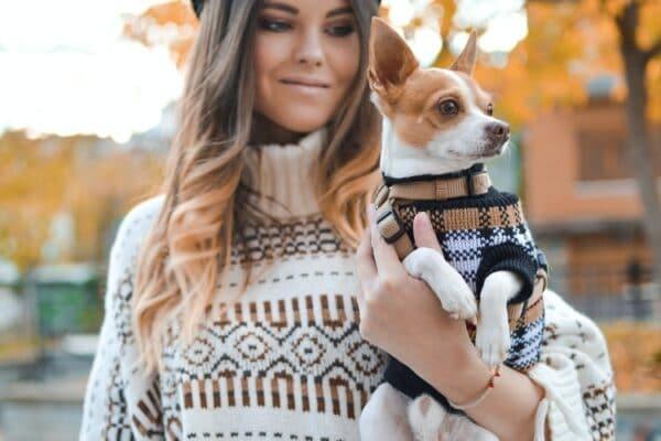 10 bienfaits CBD pour chien