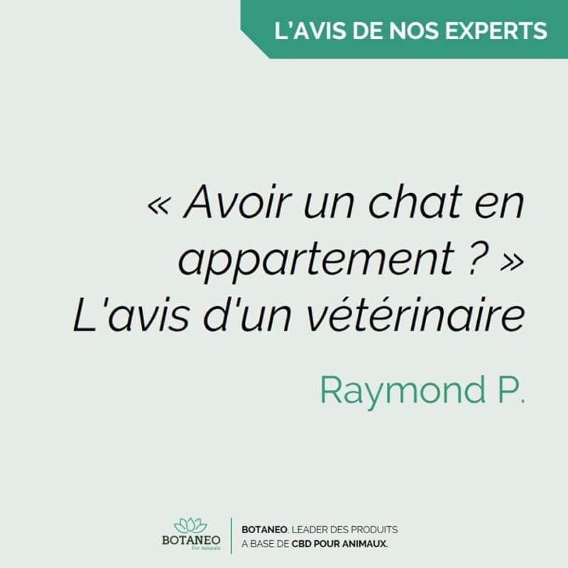 Chat en appartement : l'avis d'un vétérinaire