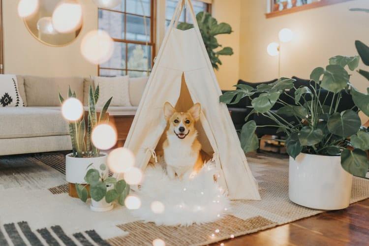 Donner du CBD pour chien : les choses à savoir