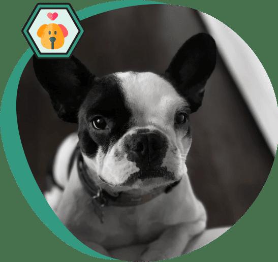 Aventure Botaneo CBD pour chiens & chats
