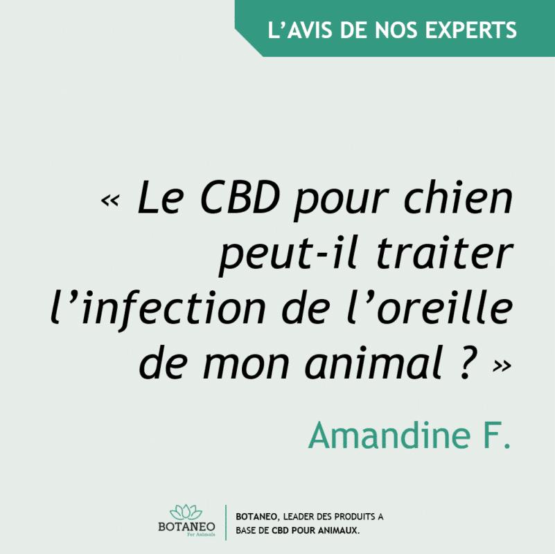 CBD pour chien et infection de l'oreille