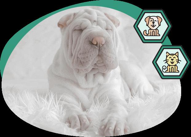 Produits CBD adapté pour chiens & chats Botaneo