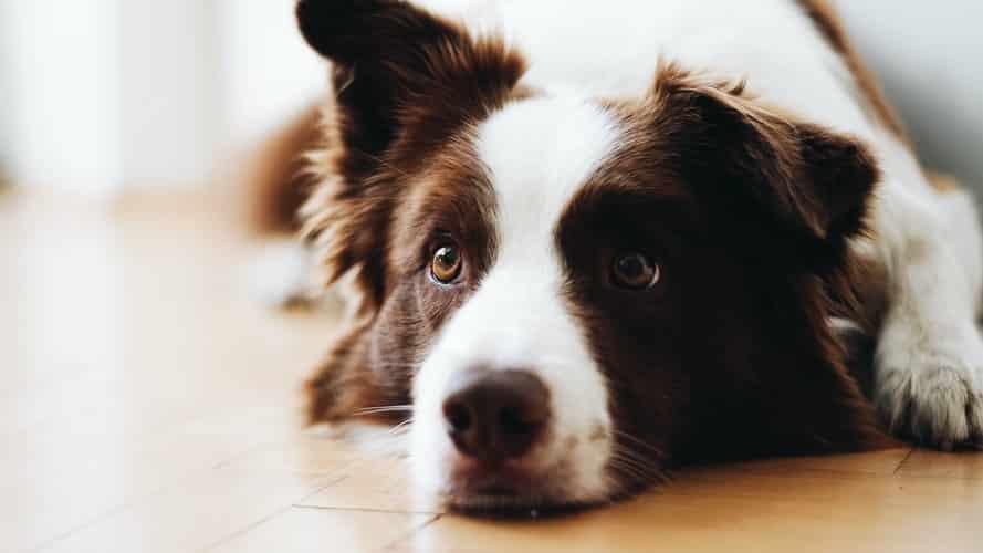 Comment rassurer un chien qui a peur du vétérinaire ?