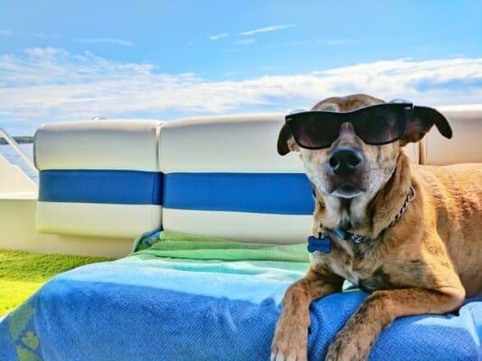 Comment et pourquoi protéger son chien du soleil et de la chaleur en été