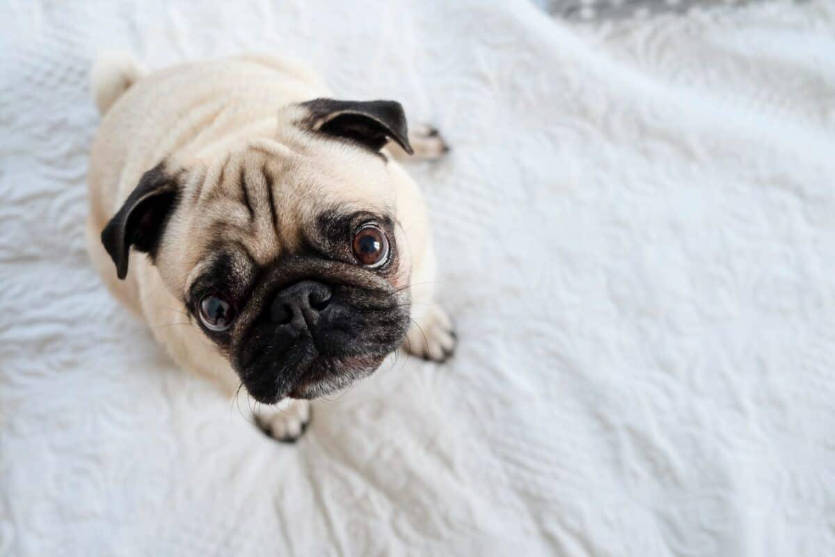 Vers chez le chien comment les détecter et les éliminer