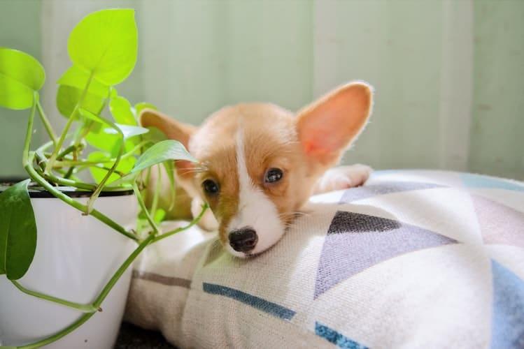 La Chine annonce l'exclusion des chiens et chats dans la liste officielle des animaux comestibles