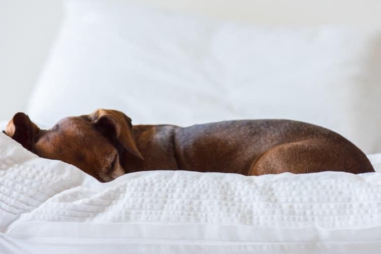 10 maladies que votre chien peut vous transmettre et comment les éviter