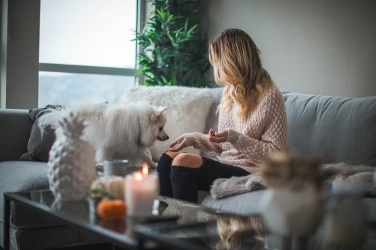 Meilleur anti-stress pour chien, que choisir ?