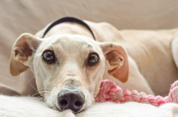 Quel collier calmant choisir pour mon chien ? Guide complet