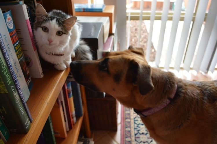 Pourquoi les chats et les chiens ne s'entendent pas