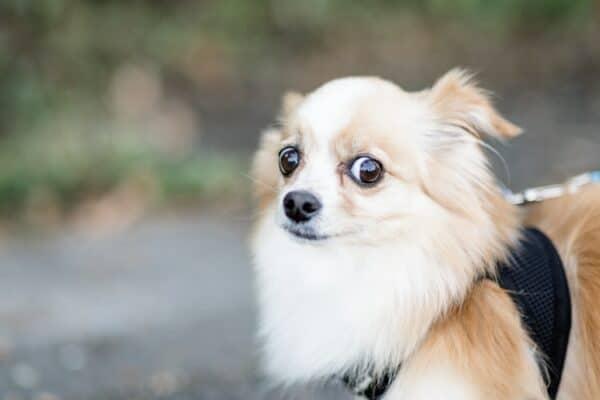 Mon chien a peur de l'orage. Solutions