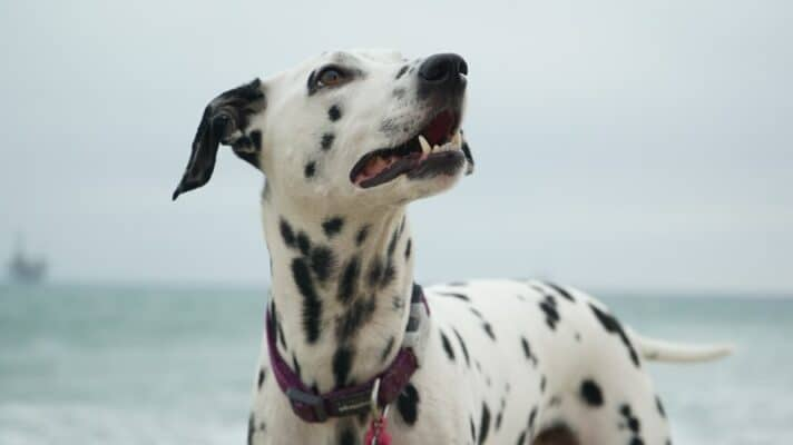 Causes et traitement : chien qui saigne