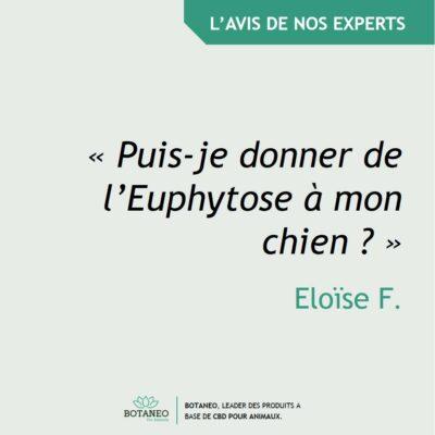 Euphytose et chien : possible ?