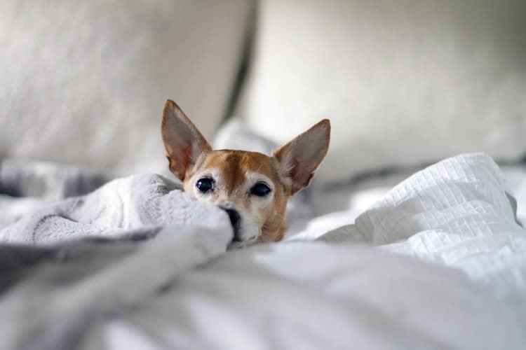 Stress et anxiété chez le chien