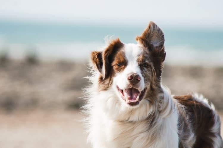 Techniques pour relaxer et détendre mon chien