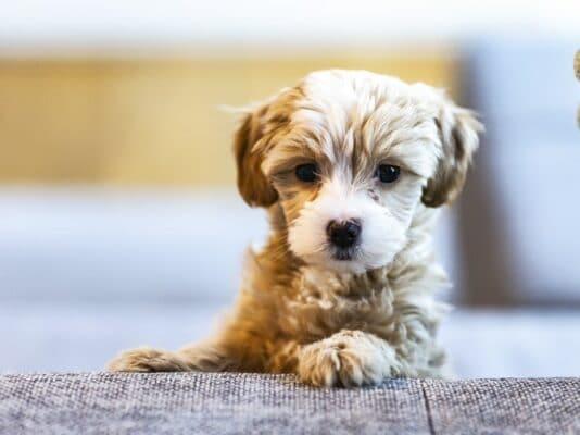 Avoir un chien pour vivre plus longtemps