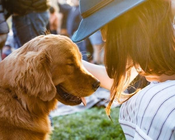 Avis de propriétaire de chien et chat sur le CBD