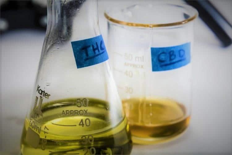 CBD & THC Comprendre la Différence pour le Traitement chez l'Animal