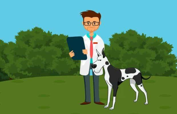 Les vétérinaires donnent leur avis sur le CBD pour chien et chat