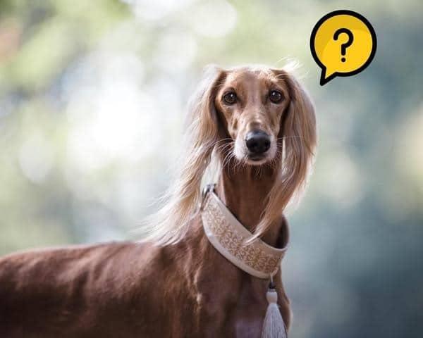 Les plus grands mythes sur le CBD pour chien et chat