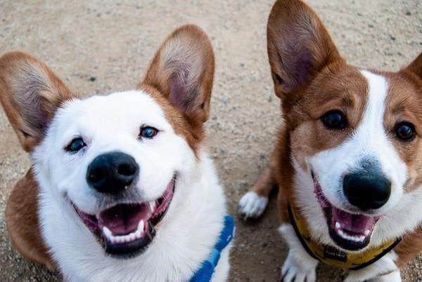 Le CBD pour chien en cure dès 12 mois