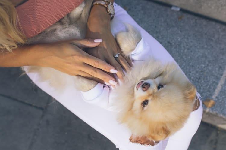 Coronavirus : Mon chien est-il en danger ?