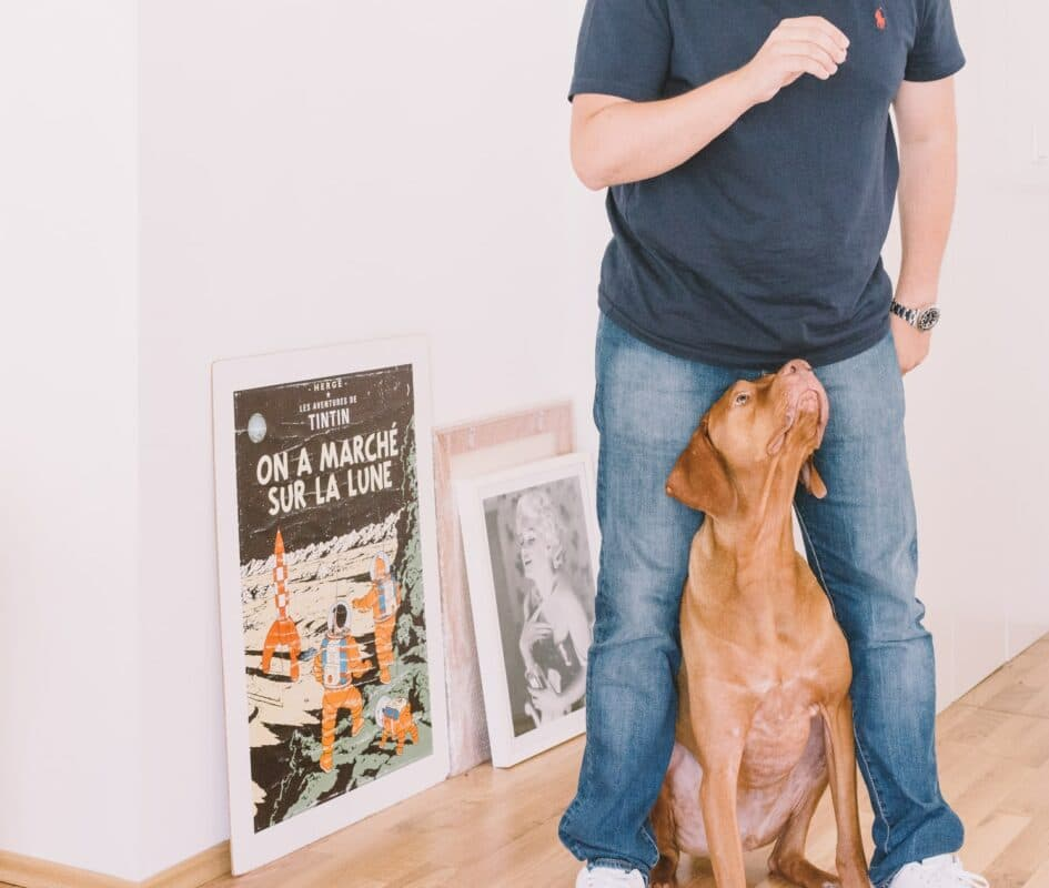 Anxiété de séparation : traitements naturels pour chien