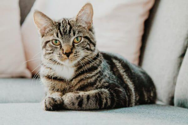 Mon chat souffre : que puis-je lui donner ?
