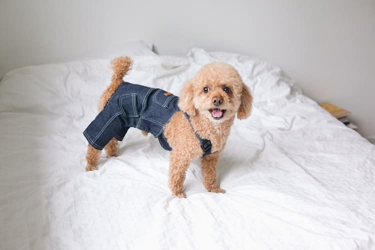Pourquoi mon chien perd ses poils