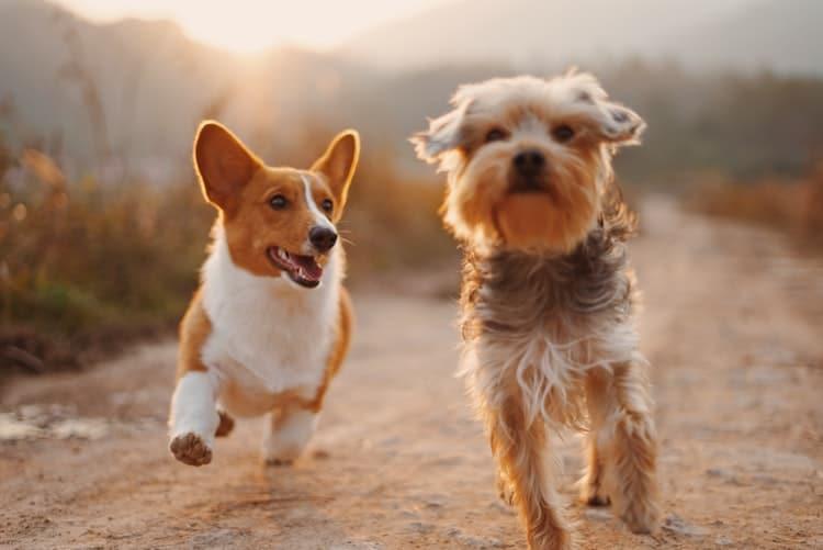 Tout savoir sur le CBD pour chien