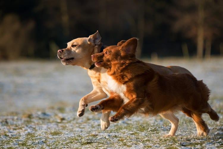 Meilleur traitement pour soulager articulation chien