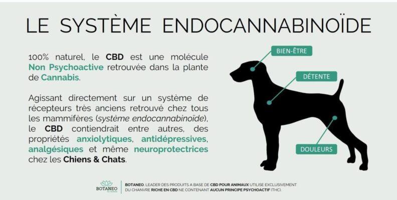 CBD pour chien : pourquoi ?