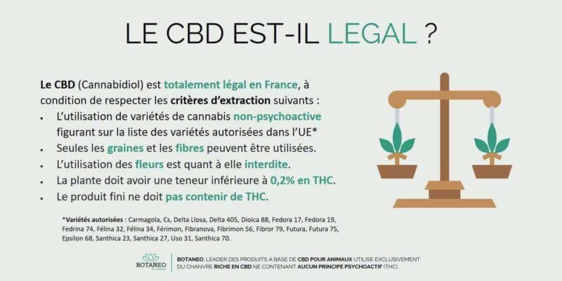 CBD pour chien : légal en France ?