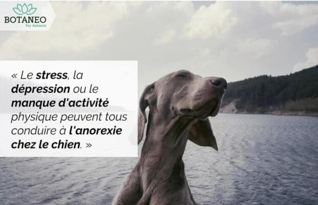 CBD et troubles alimentaires chez le chien