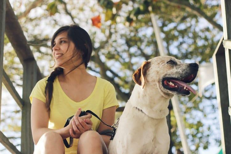 CBD pour chien efficace contre la douleur