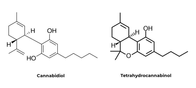 Cannabis : quelle différence entre le CBD et le THC