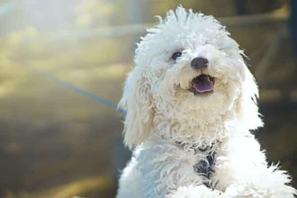 Maltraitance chien : apaiser le stress