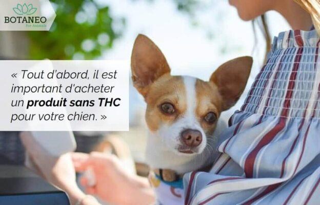 Acheter le meilleur CBD pour chien - Conseil