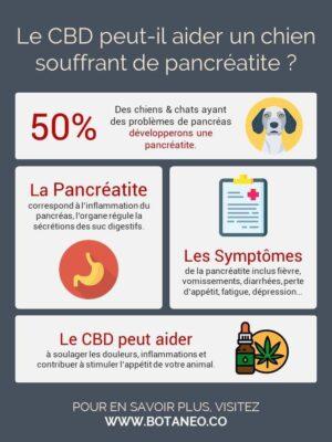 CBD efficace pour la pancréatite chez le chien