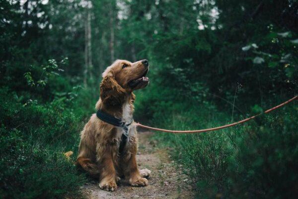 Médecine douce et naturelle pour chien