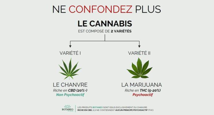 Différence entre le chanvre et la marijuana