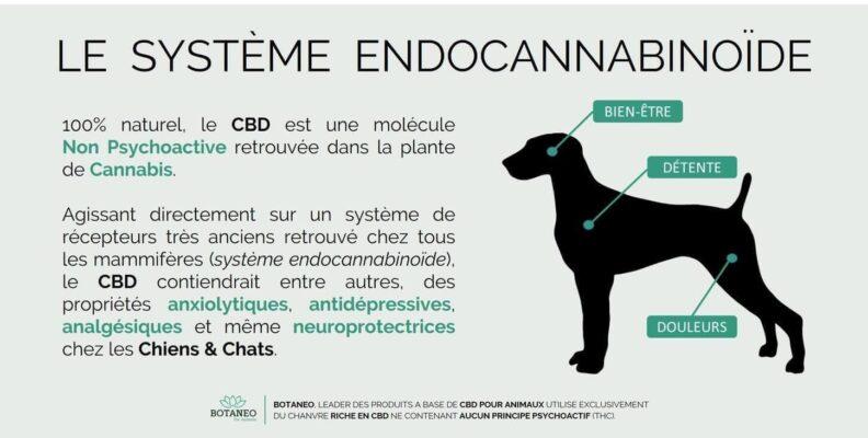 Qu'est ce que le système endocannabinoide chez les chiens