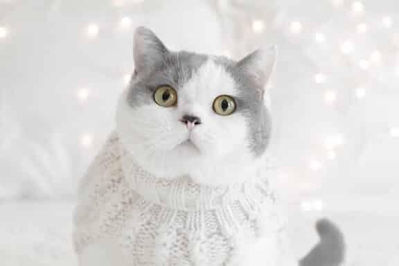 Egérie chat de Botaneo, marque n°1 CBD pour animaux