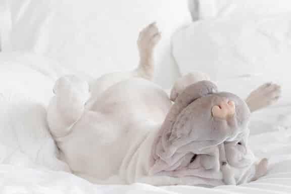 Un chien heureux et détendu