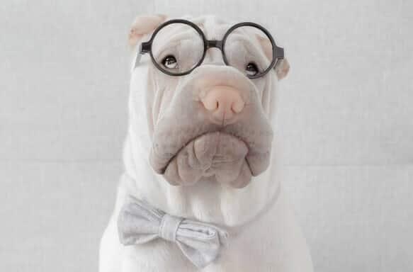 Chien avec des lunettes rondes - Botaneo