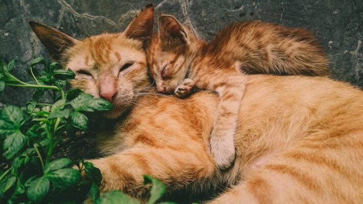L'ostéopathie chien et chat