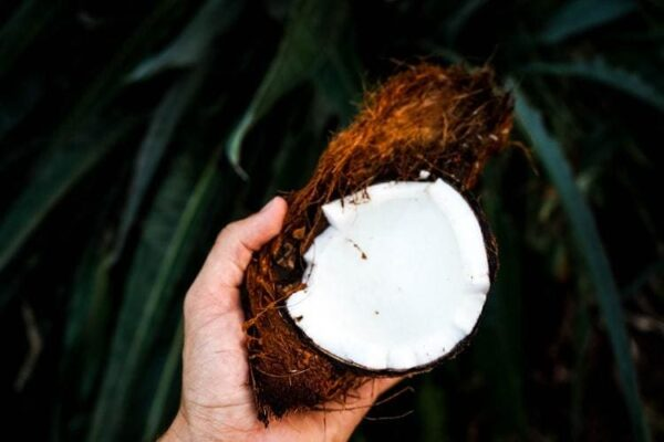 Bienfaits de la noix de coco sur les chiens et recettes maison