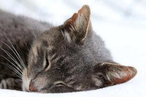 Raisons pour lesquelles un chat arrête de manger