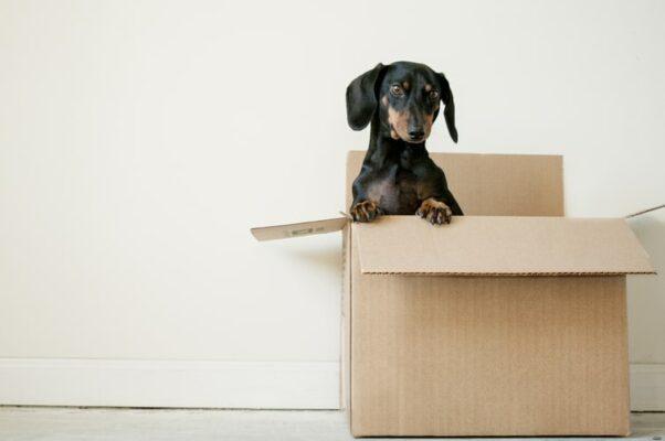 Déménagement, vacances, pensions, chien stressé nouvel environnement