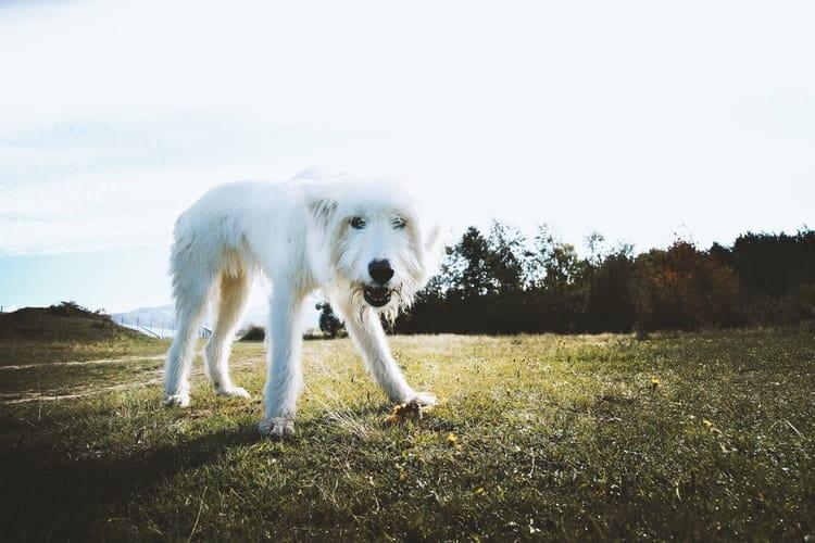 Vidéo chien abandonné près d'une gare